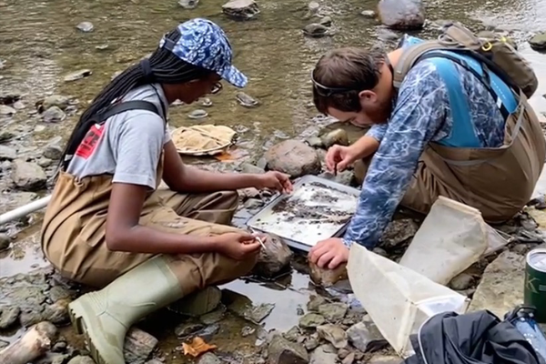 Students learning and practicing macroinvertebrate sampling techniques.