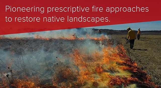 Pioneering prescriptive fire approaches to restore native landscapes.