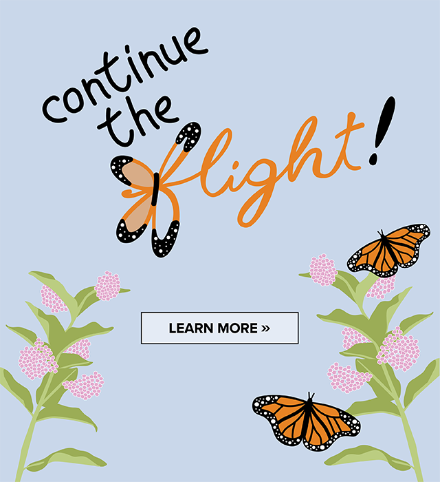 Continue the Flight - image of monarchs and milkweed