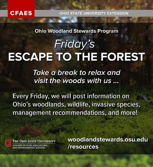 Ohio Woodland Stewards Program - Friday's Escape to the Forest