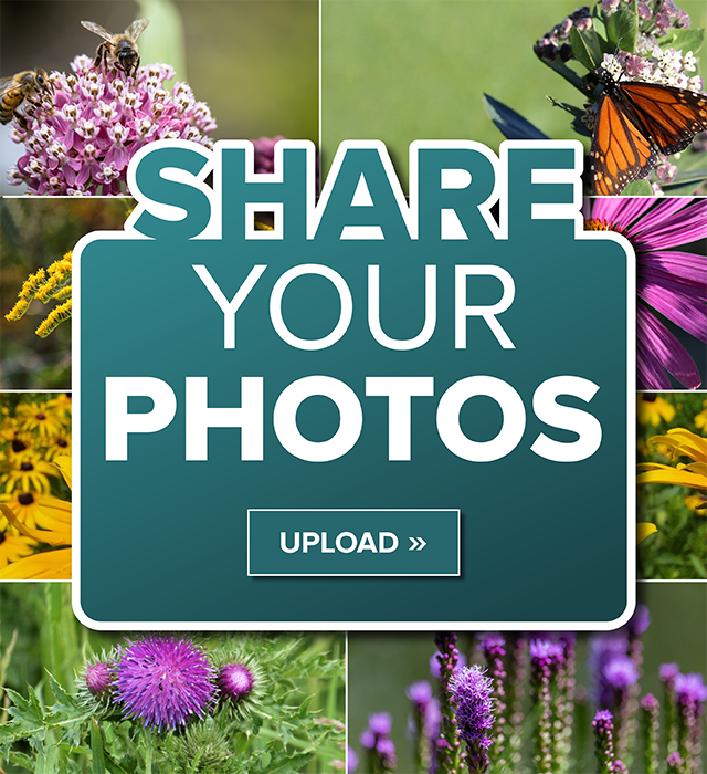 Share Your Photos - images of flowers, bees, and butterfly