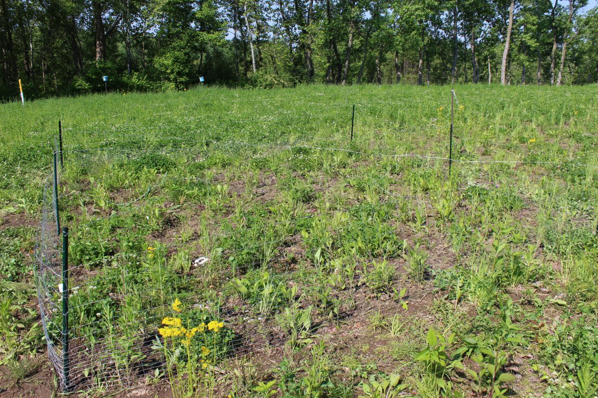 A deer exclosure was installed to ensure pollinator plant establishment and prohibit grazing on the plants. Photo credit: Gabriel Karns