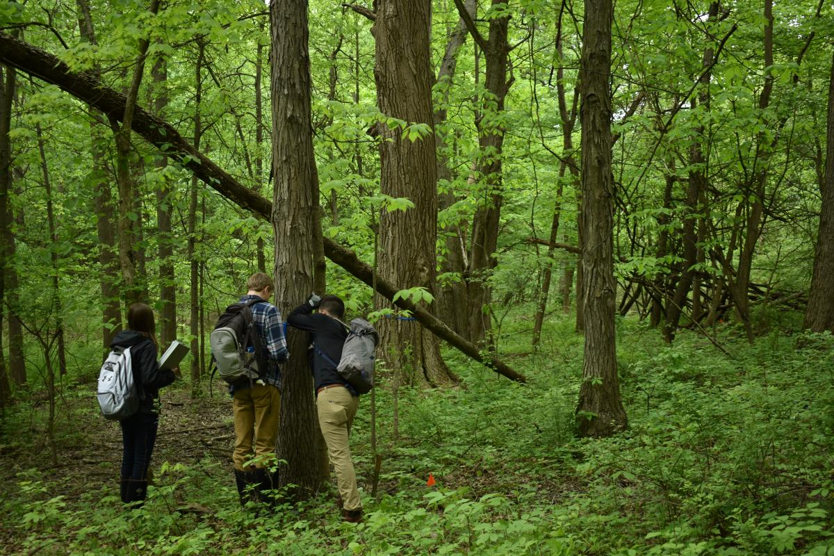 Ethan Ross and Jason Matyac (ENR 4900.02 students) and Alyson Holzworth (Mansfield Ecolab summer intern) log GPS coordinates for a shagbark hickory to include on the tree identification trail.