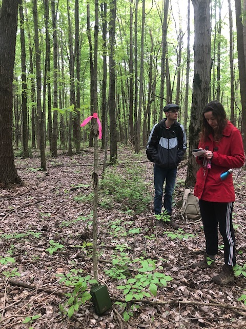 Sarah Segers and Jay Netzel place an audio recorder at a random forest point to survey for songbirds at Ohio State Mansfield.