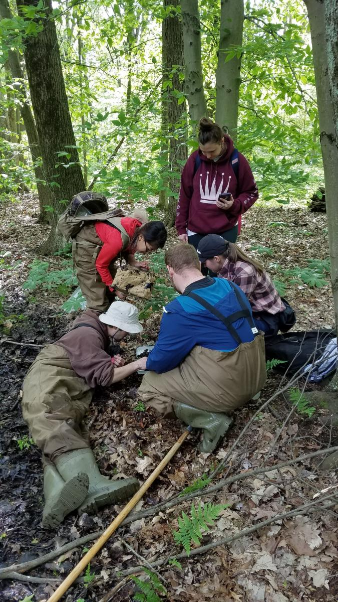 ENR students Tim Sugrue, Tammy Pham, and Grant Shivley accompanied by Mansfield Ecolab interns Sedona Palmerton and Alyson Holzworth sort through aquatic macro-invertebrates to gauge quality of the Horseshoe vernal pool at Ohio State Mansfield.