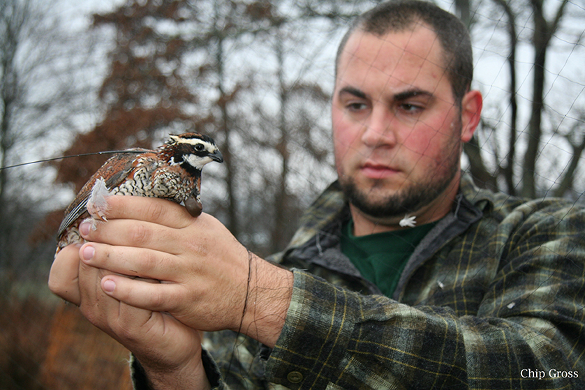 Randall Knapik, graduate student in the School of Environment and Natural Resources and presenter at upcoming Midwest Fish and Wildlife Conference with a bobwhite.