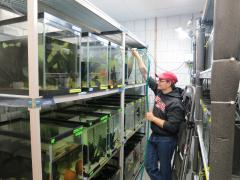 A student working in Suzanne Gray's lab