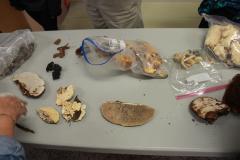 Fungi Workshop, Mansfield Campus 3