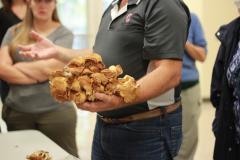 Fungi Workshop, Mansfield Campus 5