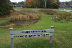 Pollinator Plot on Mansfield Campus