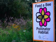 Grant from Feed a Bee used to Establish Pollinator Habitat on Pipeline Rights-of-Way in Eastern Ohio.