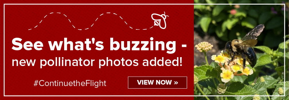 See what's buzzing - new pollinator photos added!