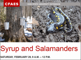 Syrup and Salamanders on February 29 at Ohio State Mansfield.