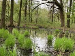 This vernal pool in Ohio is an example of a non-floodplain wetland that is not protected under the new federal rule. These waterbodies are interconnected in many ways with stream and river networks. Photo courtesy of Mažeika Sullivan