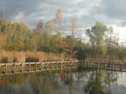 Wilma H. Schiermeier Olentangy River Wetland Research Park (ORWRP)