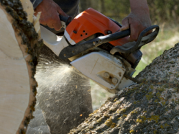 Ohio State's Ohio Woodland Stewards Program is co-sponsoring a chainsaw safety class on Aug. 3 in Mansfield. (Photo: iStock.)