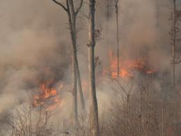 Forest burn.