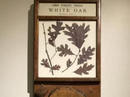 Exhibit educates public on Ohio's forest resources