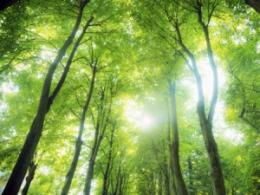 Forests throughout the U.S., not just in the West, are vulnerable to drought and climate change, a new analysis finds. (Photo: iStock.)