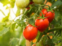The Ohio Ecological Food and Farm Association's 39th annual conference, featuring sustainable and organic ways to grow food, is Feb. 15-17 in Dayton. (Photo: iStock.)