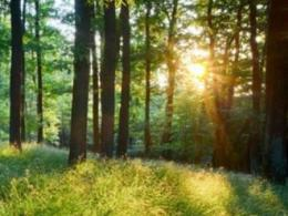 A June 20 tour from Mansfield to Millersburg will show how trees become products such as furniture. (Photo: iStock.)