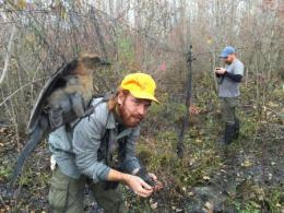 Assistant Professor Tonra (shown in background) was recently interviewed by the Ohio Young Birders Club. He is shown here with graduate student Jay Wright (foreground). The pair are studying Rusty Blackbirds at Ottawa National Wildlife Refuge. Photo by Luke Powell.