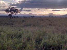 Tanzania's natural vegetation.