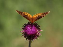 Partnering for Pollinators. Photo credit: Gabriel Karns