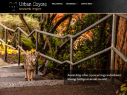 Visit The Urban Coyote Research Project's refreshed website.