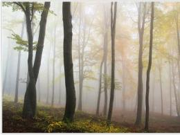 Forests fight global warming in ways more important than previously understood. Image provided by The Ohio State University.